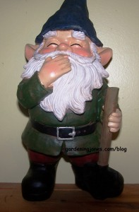 laughing gnome