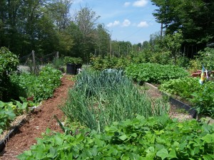 Gardening Jones shares some tips to help you choose the right onions to plant.