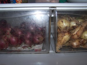 onions in the fridge