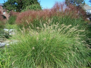 decorative grasses in autumn