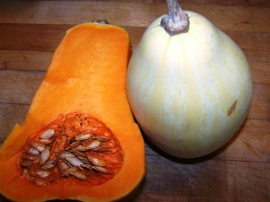 butternut and coosa squash