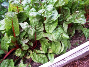 how to grow swiss chard in the home garden