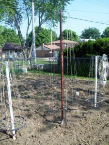 homemade bean poles
