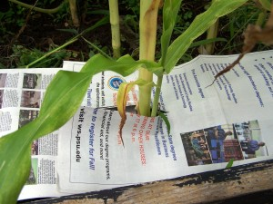 newspaper for weed prevention