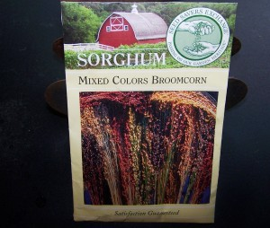 broomcorn aka sorghum seeds
