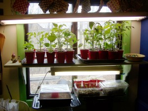 indoor seed starting area