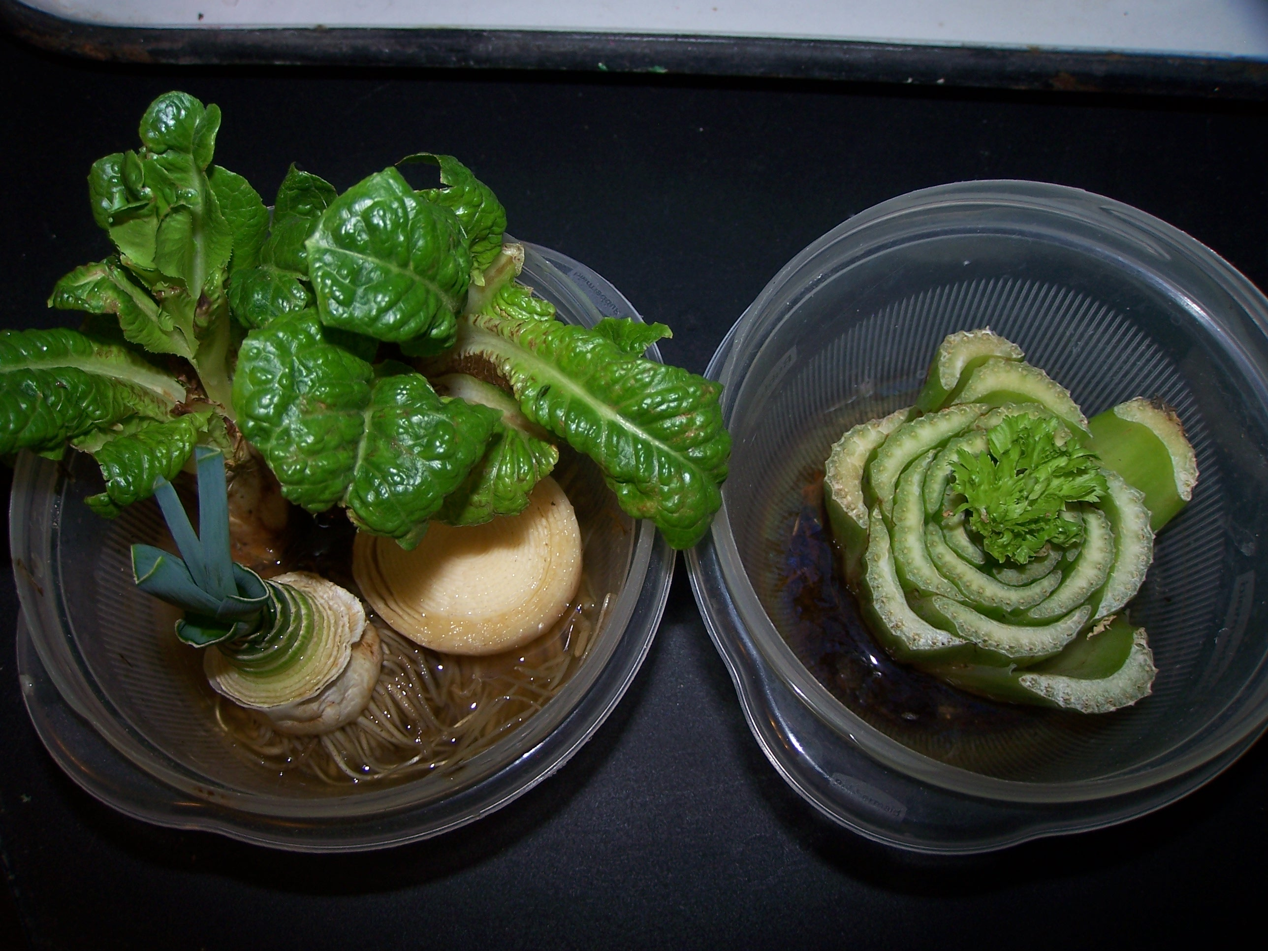 Vegetables from scraps yep you can grow that for What vegetables to grow