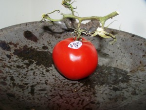 The last store bought tomato for the summer.