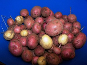 Homegrown taters.