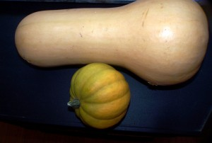 Butternut and a wee volunteer acorn.