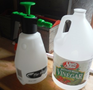 killing weeds with vinegar
