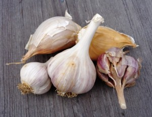 growing better garlic