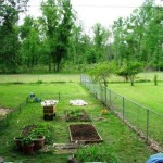 The Intrepid Gardener shares her first experiences in the veggie garden.