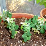 Gardening Jones shares some plant varieties that can help you get more from your gardening space.
