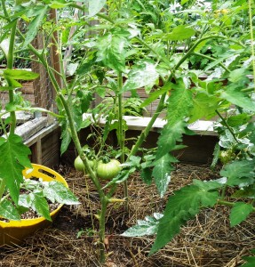 Gardening Jones shares some good reasons to do more pruning in your vegetable garden.