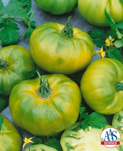 Gardening Jones shares her experience with the AAS winner Chef's Choice Tomato.